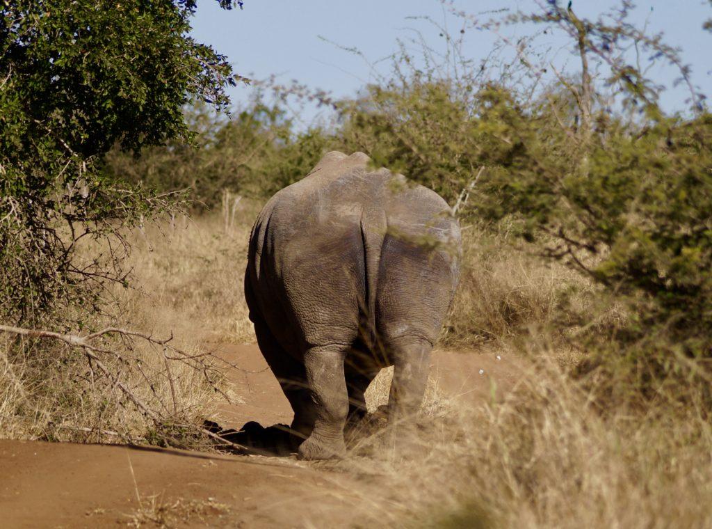 Beste Reisezeit Eswatini für Wildtierbeobachtungen